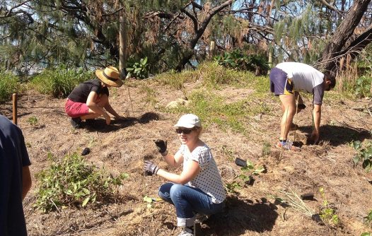 Mulambin Beach Clean-up and Tree Planting Day   Advocacy & Community Projects   Capricornia Catchments