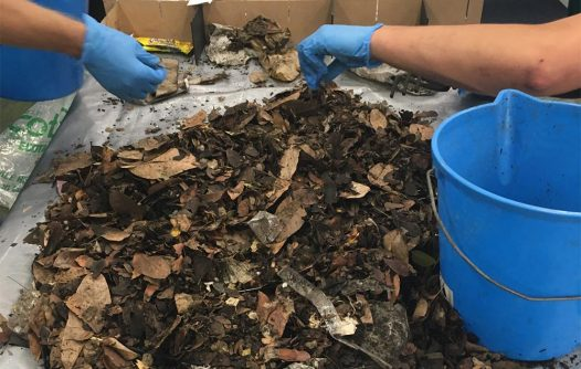 Drain Buddy Initiative   Advocacy & Community Projects   Capricornia Catchments