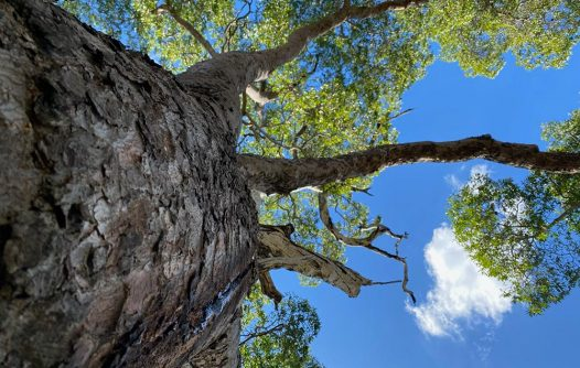 Bush Balance Program   Advocacy & Community Projects   Capricornia Catchments